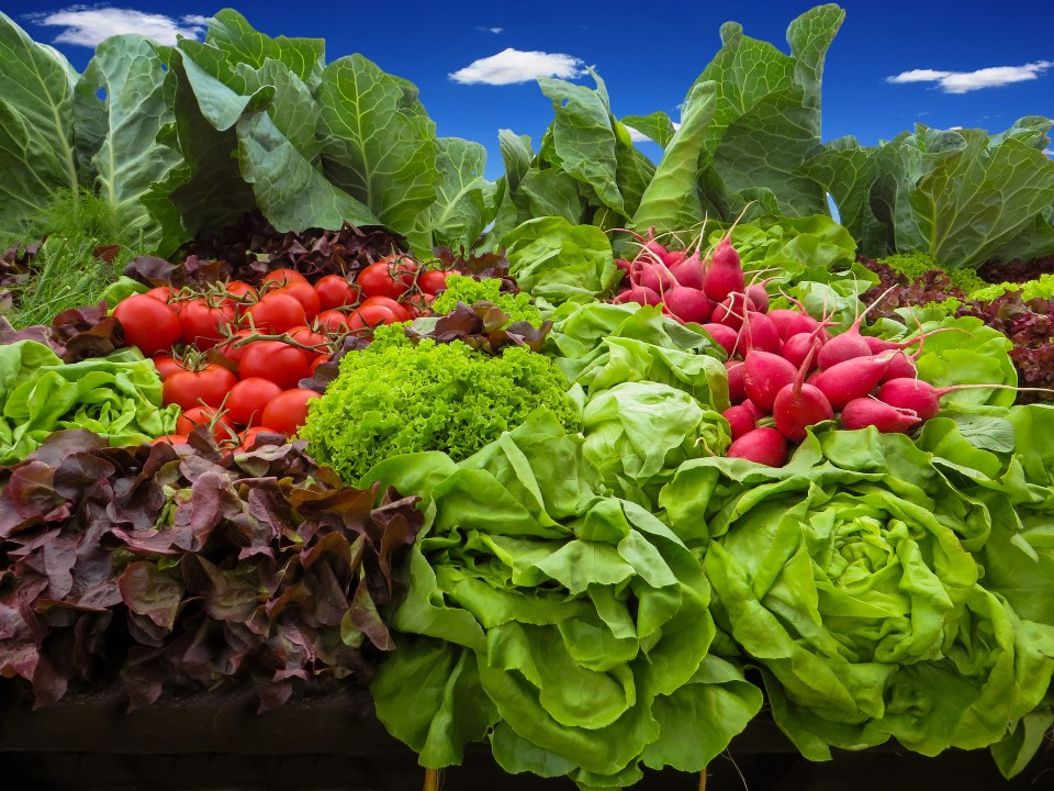 Planning Your Own Edible Eco-Friendly Yard